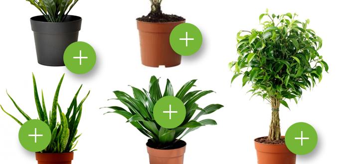 Растения в качестве звукоизоляции